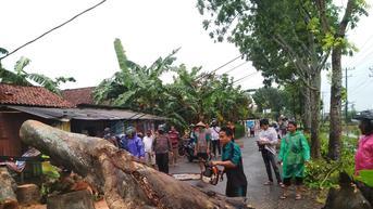 Ngeri, Detik-Detik Pohon Mahoni Tumbang Timpa Pemotor di Kebumen