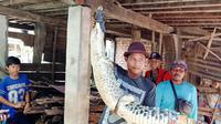 Nelayan Banyuasin Sumsel memegang buaya muara sepanjang dua meter, yang terperangkap dalam jaring ikan milik di aliran sungai (Liputan6.com / Nefri Inge)