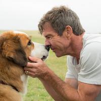 Film A Dog's Purpose tuai protes karena memaksa seekor anjing masuk ke kolam air berarus. (Via: A Movie Web)