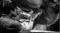 Lihat gajah, Maruli Tampubolon teringat sang kakek  (Foto: Instagram)