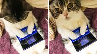 Kucing bermain video game (Sumber: Twitter/bu_ri_co)