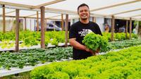 Rudy Adam petani hidroponik Gorontalo yang usahanya bertahan meski di tengah pandemi (Liputan6.com/Gorontalo)
