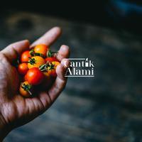Tomat untuk Kecantikan kulit. (Unsplash.com/ Chinh Le Duc).