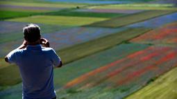 Seorang turis mengambil gambar bunga yang sedang mekar dan ladang lentil di Castelluccio, sebuah desa kecil di wilayah Umbria, Italia tengah pada 6 Juli 2020. Setiap tahunnya antara Mei dan Juli, ribuan varietas bunga liar  bermekaran dan menjadi daya tarik wisatawan. (Tiziana FABI / AFP)