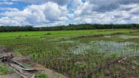 Dengan tren pertambahan penduduk yang sama dan alih fungsi sawah Pulau Jawa dan luar Pulau Jawa yang sulit dihambat.