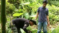 Tiga kamera penjebak dipasang, BKSDA memantau harimau pemangsa ternak di Agam. (Liputan6.com/Novia Harlina)