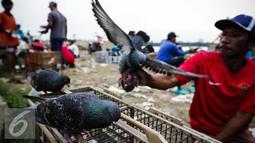 Burung merpati jantan diatas kandangnya dilatih untuk adu ketangkasan di Sunter, Jakarta, Selasa (29/11). Salah satu permainan burung merpati yang dilombakan adalah kolongan, yaitu merupakan salah satu bentuk seni adu tangkas. (Liputan6.com/Faizal Fanani)