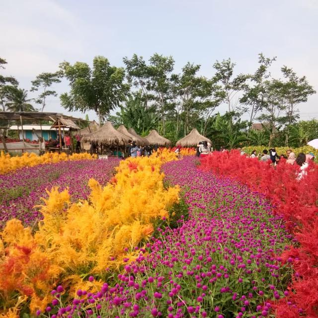 Terpikat Cantiknya Taman Bunga Kadung Hejo Di Pandeglang