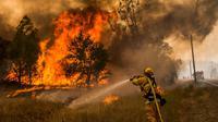 Seorang petugas pemadam kebakaran sedang memadamkan lahan yang terbakar di kawasan Rocky Fire, San Francisco, California, Kamis (30/7/2015). Kebakaran terletak 180 km, sebelah utara dari San Francisco. (REUTERS/Max Whittaker)