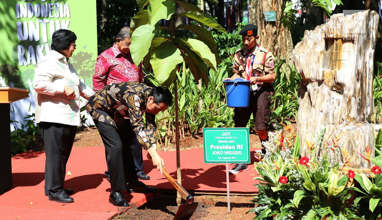 Presiden Joko Widodo didampingi Menteri LHK, Siti Nurbaya dan Menkoperek Darmin Nasution saat menanam pohon pada peringatan hari lingkungan hidup 2017 di Kementerian Kehutanan, Jakarta, Selasa (2/8). (Liputan6.com/Angga Yuniar)
