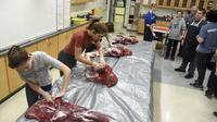 Murid Alaska mengolah daging rusa di sekolah. Dok: AP News