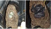 Pria ini temukan sarang dan bayi bruung di sepatunya. (Sumber: World of Buzz)