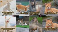 Meme gombalan kucing (Sumber: Instagram/nekorenid)