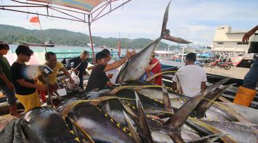 Ikan tuna dan cakalang. (Dok KKP)