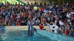 Atraksi Dolphin Christmas Show di Ocean  Dream Samudera Ancol, Jakarta, Jumat (25/15/2015). Pertunjukan tersebut diadakan dalam rangka menyambut libur Natal. (Liputan6.com/Gempur M Surya)