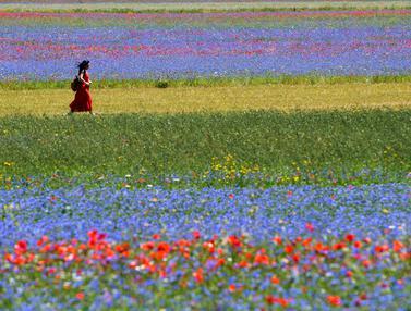 Ladang Bunga Castelluccio di Italia
