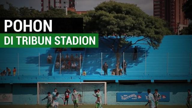Berita video pohon yang dibiarkan berada di tengah tribun stadion sepak bola di Paraguay. Tribun itu terdapat di stadion Tomas Beggan Correa