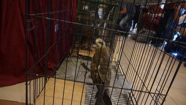6 Bulan Bisnis Jual Beli Burung Langka Warga Bandung Ditangkap