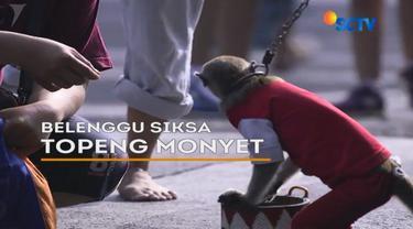 Topeng monyet salah satu hiburan rakyat yang masih digemari, Namun miris melihat monyet terguncang karena tarikan di leher yang terikat tali