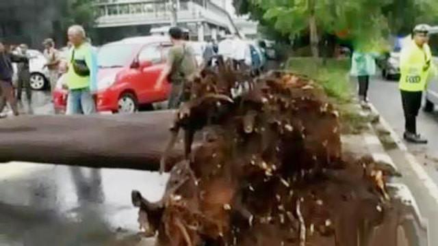 Angin kencang membuat pohon besar tumbang di dekat patung Jenderal Sudirman, hingga Dita dan Masinton memberikan penjelasan berbeda.