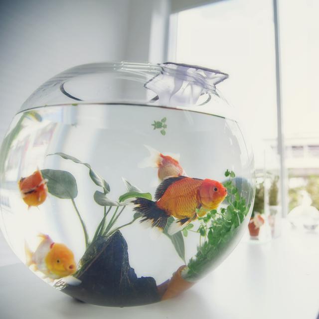 Jenis Ikan Hias Air Tawar Kecil Cocok Menghiasi Akuarium Ruang Tamu Lifestyle Liputan6 Com