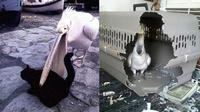 Tingkah burung (Sumber: Boredpanda)