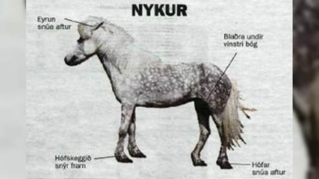 Ilustrasi Nykur, kuda legenda Islandia. (Sumber Twitter/@ClayFJohnson)