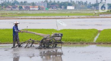 Memanfaatkan Lahan Pertanian dengan Berinovasi di Masa Pandemi