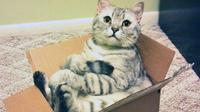 Pernahkah Anda bertanya-tanya, mengapa kucing sangat menyukai kotak? Ini ternyata alasannya