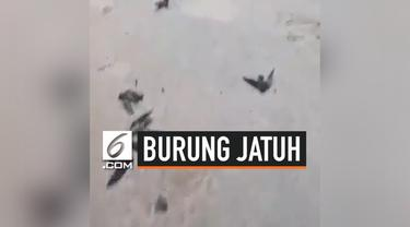 Kabut asap yang melanda daerah Sumatera dan Kalimantan akibat kebakatan hutan dan lahan tidak hanya berdampak pada manusia saja. Beberapa burung berjatuhan dari langit. Momen ini diabadikan oleh seorang aktivis penggerak lingkungan.