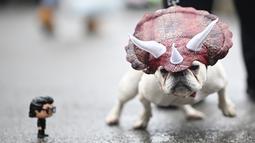 Seekor anjing mengenakan kostum ala dinosaurus saat menghadiri Tompkins Square Halloween Dog Parade di Manhattan, New York City, Amerika Serikat, Minggu (20/10/2019). (Johannes EISELE/AFP)
