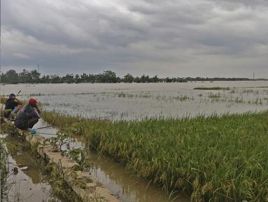 Warga memancing di sawah yang terendam banjir di Desa Karangligar, Kecamatan Telukjambe Barat, Karawang, Jawa Barat, Kamis (10/2/2021). Banjir di Desa Karangligar akibat meluapnya sungai Citarum dan Cibeet membuat ratusan rumah terendam banjir dan ratusan hektar sawah. (Liputan6.com/Herman Zakharia)