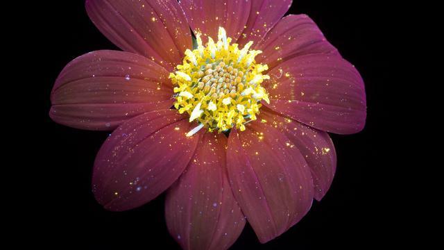 Lihat Keindahan Bunga Yang Bisa Menyala Dalam Gelap Citizen6