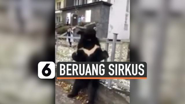 Seekor beruang hitam Himalaya dijadikan sebagai bintang iklan sirkus keliling di Rusia. Namun hal ini membuat marah masyarakat Rusia, karena beruang tersebut tampak sedih, meratap dan berbadan kurus.