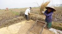 Petani merontokan padi hasil panen di Kabupaten Tangerang, Banten, Jumat (16/7/2021). Badan Pusat Statistik (BPS) mencatat nilai ekspor sektor pertanian pada bulan Juni 2021 mengalami kenaikan, yakni sebesar 33,04 persen (M-to-M) atau sebesar 15,19 persen secara (Y-on-Y). (Liputan6.com/Angga Yuniar)