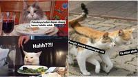 Meme kucing minta dinikahi (Sumber: Instagram/sejiwatinja)