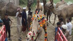Pedagang menaikkan unta ke atas truk setelah berjualan di pasar hewan yang disiapkan untuk Idul Adha di Lahore pada Minggu (4/8/2019). Umat Islam di seluruh dunia akan merayakan Hari Raya Idul Adha yang identik dengan tradisi berkurban seperti kambing, domba, onta, sapi dan kerbau. (ARIF ALI / AFP)