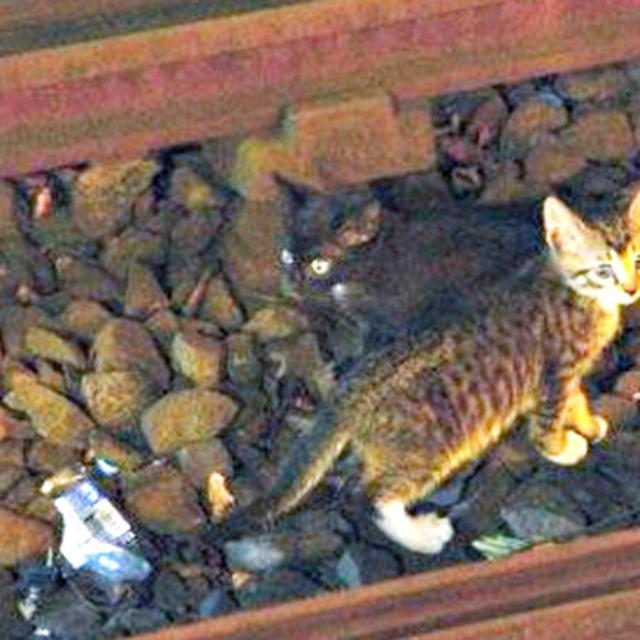Begini Cara Orang Jepang Temukan Kucing Yang Hilang Terbukti Berhasil Hot Liputan6 Com