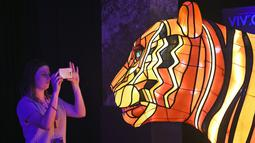 Pengunjung memfoto instalasi harimau Sumatera raksasa saat peluncuran Vivid Sydney, Australia (17/3). Instalasi harimau Sumatera ini merupakan karya seniman Australia Lucy Keeler dan Nicholas Tory. (AFP/William West)