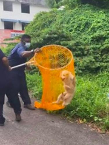 Cara petugas MBMB menangkap anjing