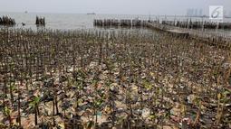 Tumpukan sampah terlihat di antara hutan mangrove di kawasan Muara Angke, Jakarta Utara, Sabtu (14/4). Sampah-sampah yang terbawa oleh arus tersebut berdampak besar pada rusaknya hutan mangrove. (Liputan6.com/Johan Tallo)