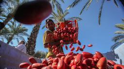Seorang petani menaruh kurma yang baru dipetik selama panen tahunan di Deir al-Balah di Jalur Gaza tengah (24/9/2019). Warga Palestina yang tinggal di Deir al-Balah tengah sibuk dengan hasil panen kurmanya yang melimpah. (AFP Photo/Said Khatib)