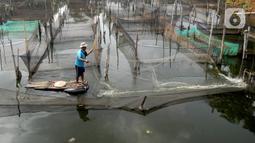 Petani menjala ikan mujair untuk dijual diantara keramba ikan hias di Situ Telaga Biru, Ciseeng, Bogor, Selasa (15/09/2020). Sebelum pandemi COVID-19, petani ikan hias mampu mendapatkan penghasilan Rp 5 juta - Rp 7 juta dan kini hanya Rp 500 ribu - Rp 700 ribu per bulan. (merdeka.com/Arie Basuki)