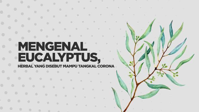vertical eucalyptus