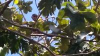 Pr (55), yang diketahui duda beranak satu sudah tiga hari berada di atas pohon. Bahkan dirinya juga melakukan salat dari atas pohon. (DIDIN CAHYA FS/ Jawapos.com)