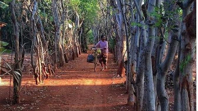 Gili Iyang Pulau Oksigen di Madura. foto: @andrepoetra_. (dok.Instagram @exploremadura/https://www.instagram.com/p/BpYs-Yal0ZL/Henry