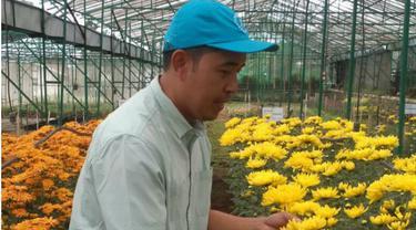 Bunga Krisan di Cianjur