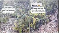 Video Pendaki Dipandu Burung Jalak saat Tersesat di Gunung Lawu Ini Jadi Sorotan (sumber: TikTok/mocha_doank)
