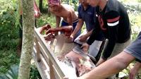Empat warga di Desa Windujaya dan Melung Kecamatan Kedungbanteng, Banyumas, terluka akibat serangan celeng, Selasa (2/7). (Foto: Liputan6.com/Muhamad Ridlo)