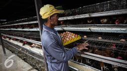 Pekerja memilah telur ayam di kandang ternak ayam telur di Cibeber, Cianjur, Jawa Barat, Rabu (30/11). Peternakan ayam tersebut memproduksi telur ayam mencapai satu ton telur per hari dari 20 ribu ekor ayam. (Liputan6.com/Faizal Fanani)